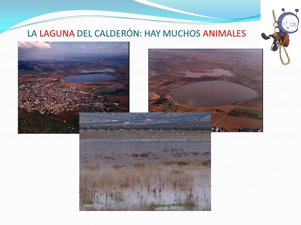 LA LAGUNA DEL CALDERÓN: HAY MUCHOS ANIMALES
