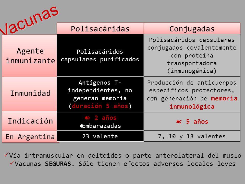 Vacunas Polisacáridas Conjugadas Agente inmunizante Inmunidad