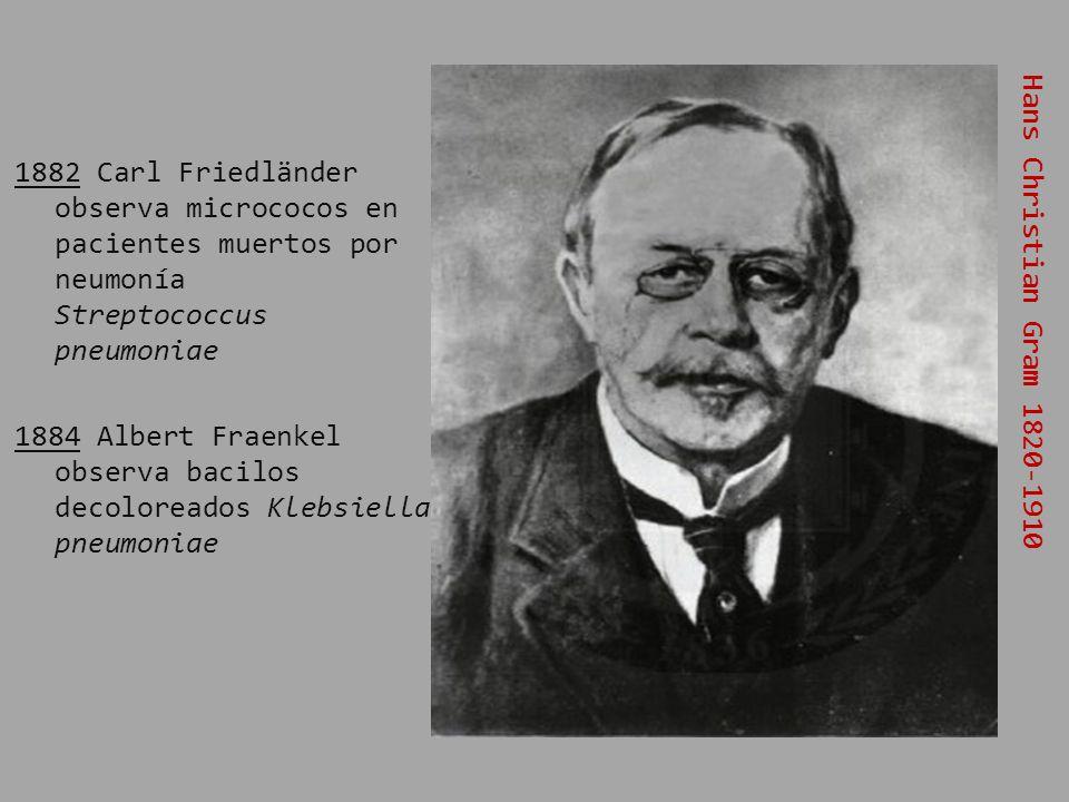 1882 Carl Friedländer observa micrococos en pacientes muertos por neumonía Streptococcus pneumoniae