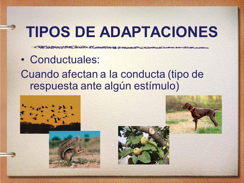 TIPOS DE ADAPTACIONES Conductuales: