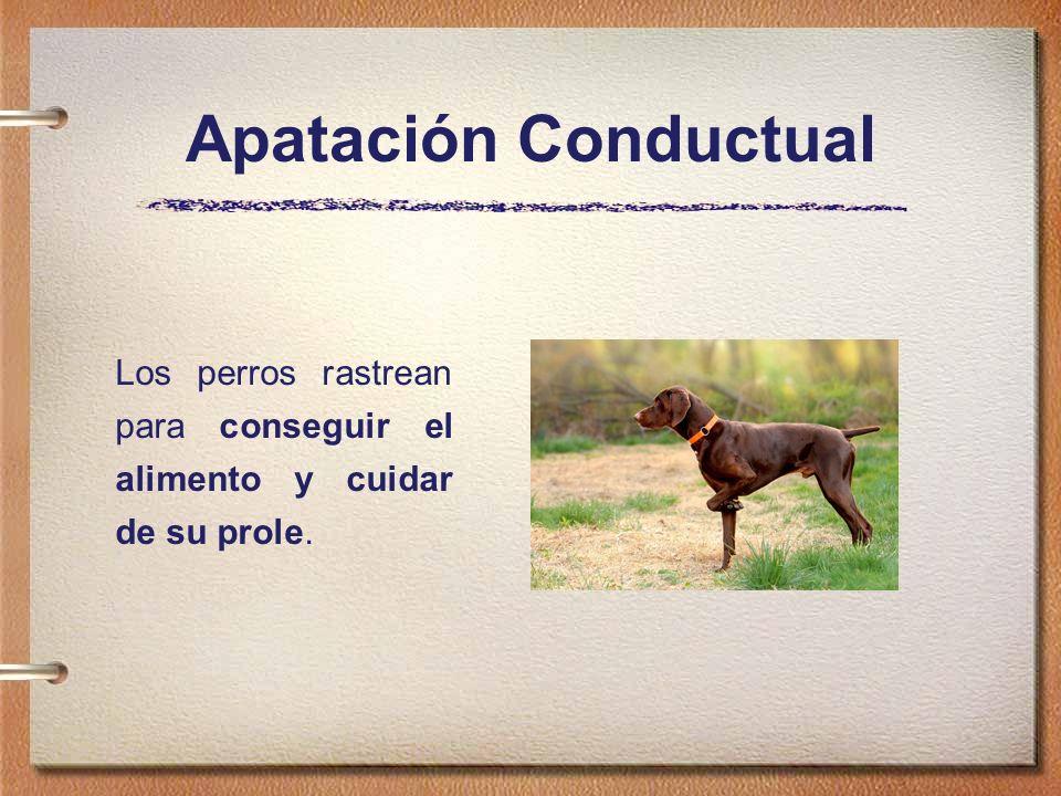 Apatación Conductual Los perros rastrean para conseguir el alimento y cuidar de su prole.