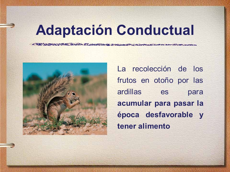 Adaptación Conductual