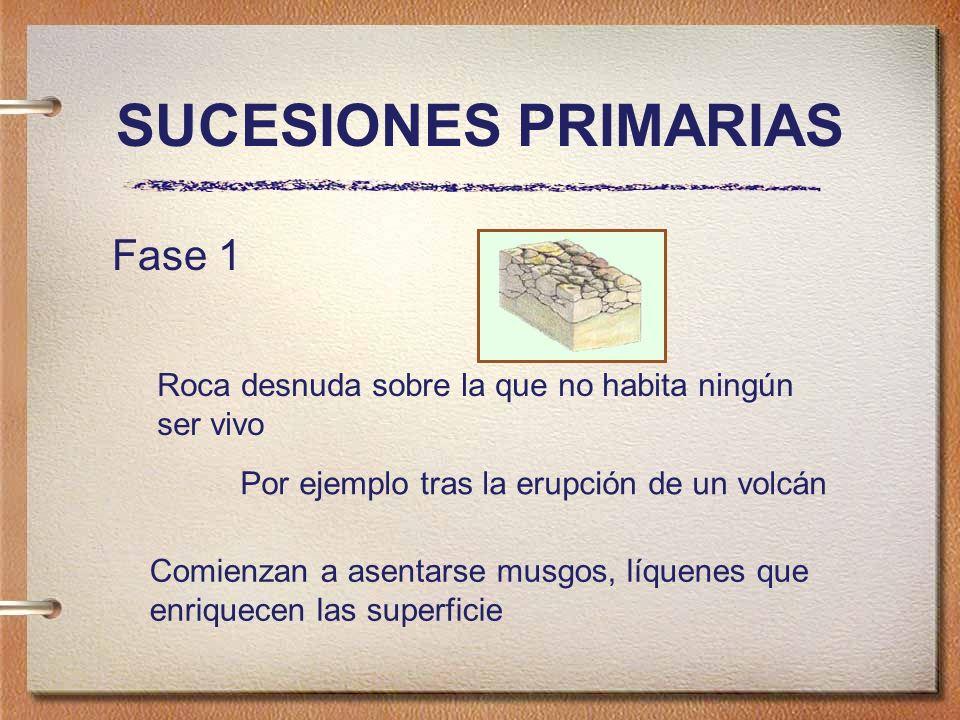 SUCESIONES PRIMARIAS Fase 1