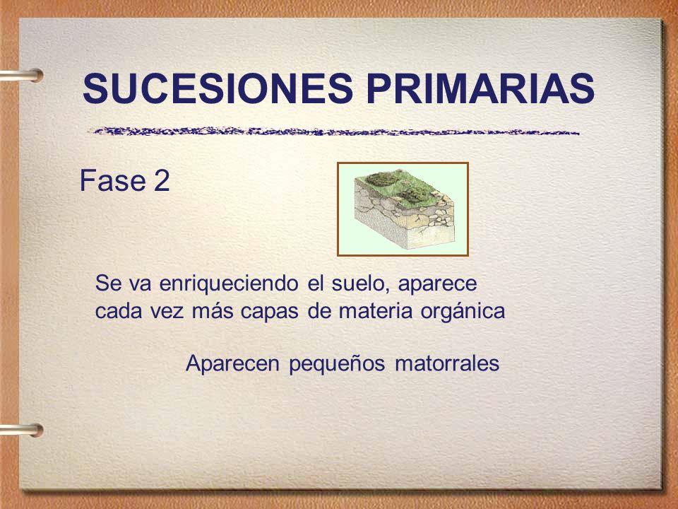 SUCESIONES PRIMARIAS Fase 2