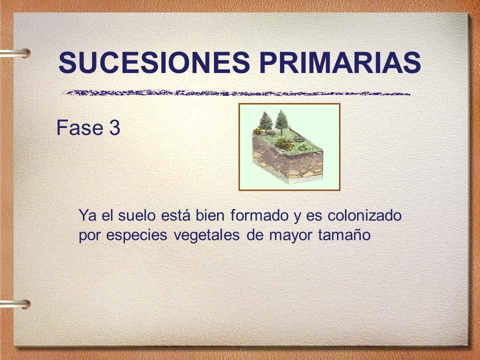 SUCESIONES PRIMARIAS Fase 3