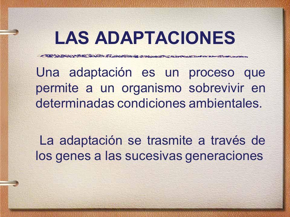 LAS ADAPTACIONES Una adaptación es un proceso que permite a un organismo sobrevivir en determinadas condiciones ambientales.