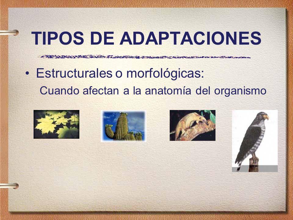 TIPOS DE ADAPTACIONES Estructurales o morfológicas: