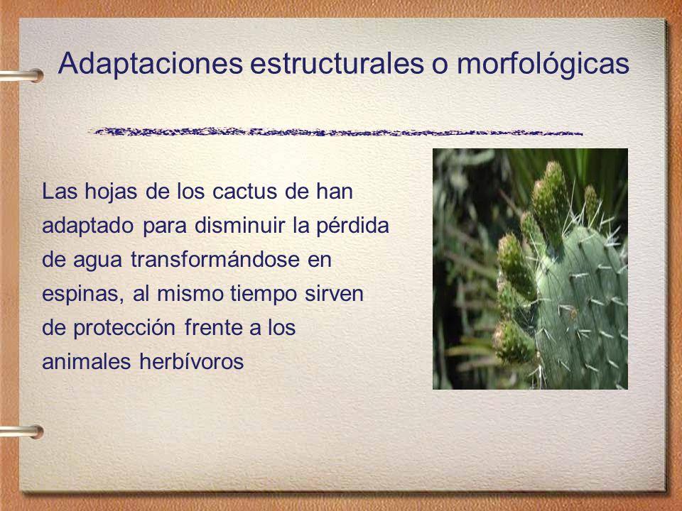 Adaptaciones estructurales o morfológicas