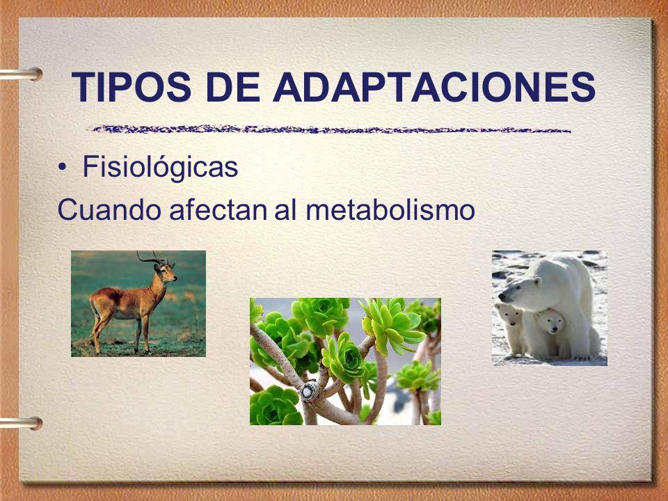 TIPOS DE ADAPTACIONES Fisiológicas Cuando afectan al metabolismo