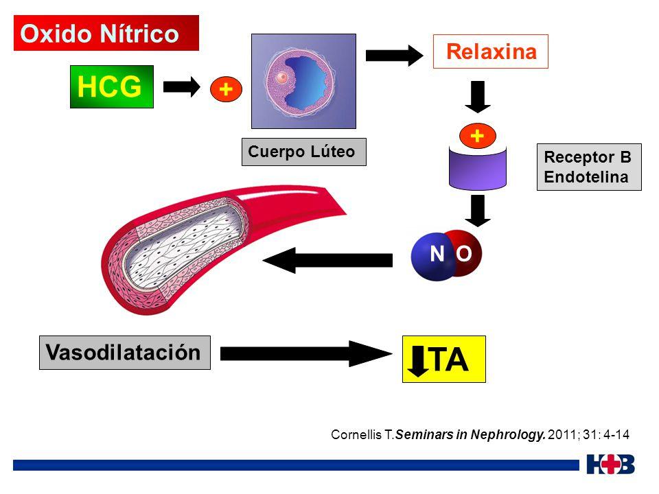 TA HCG Oxido Nítrico + + Relaxina N O Vasodilatación Cuerpo Lúteo