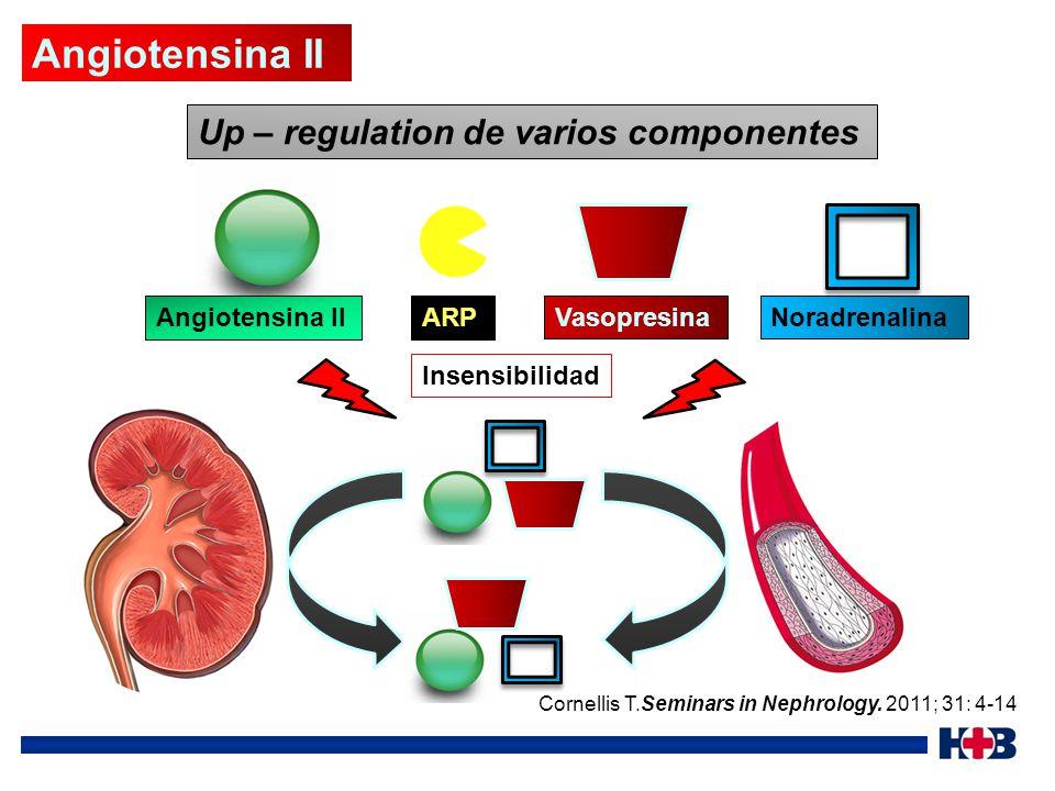 Angiotensina II Up – regulation de varios componentes Angiotensina II
