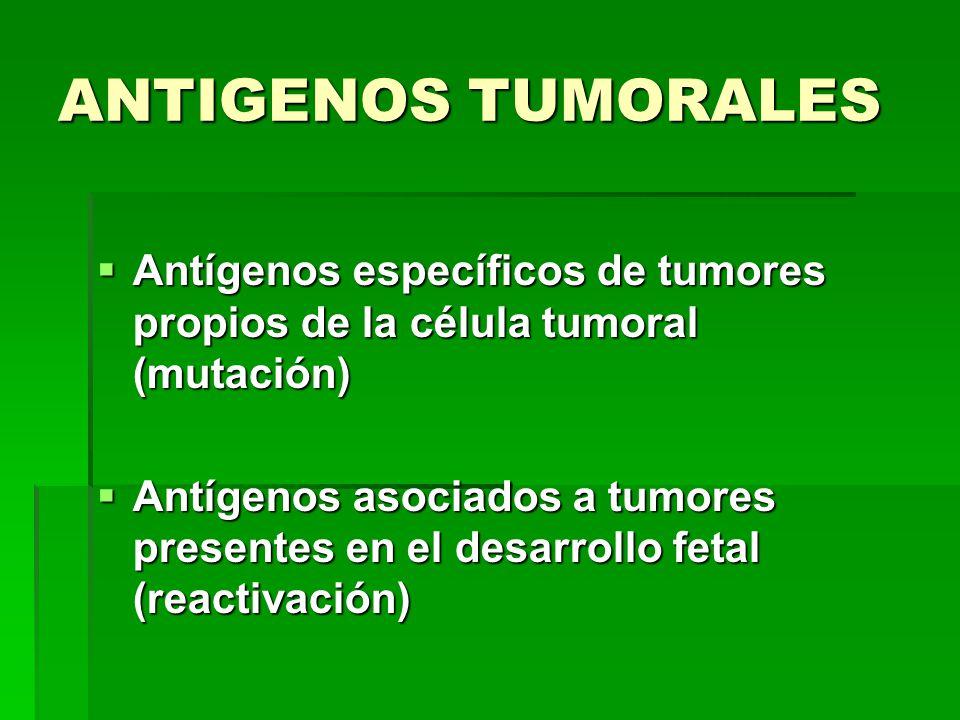 ANTIGENOS TUMORALES Antígenos específicos de tumores propios de la célula tumoral (mutación)