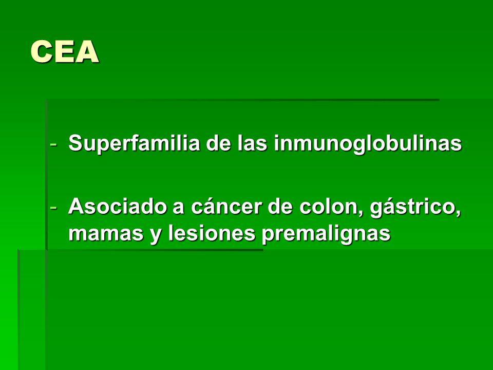 CEA Superfamilia de las inmunoglobulinas