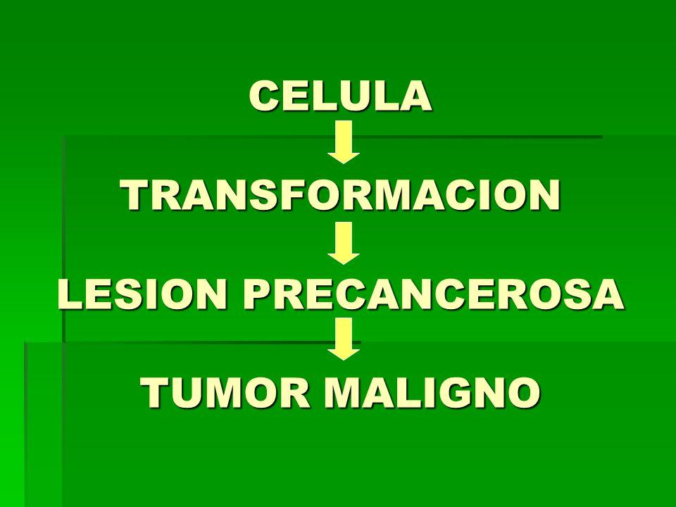 CELULA TRANSFORMACION LESION PRECANCEROSA TUMOR MALIGNO