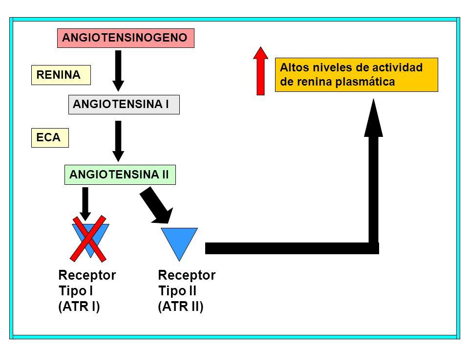 Receptor Tipo II (ATR II)