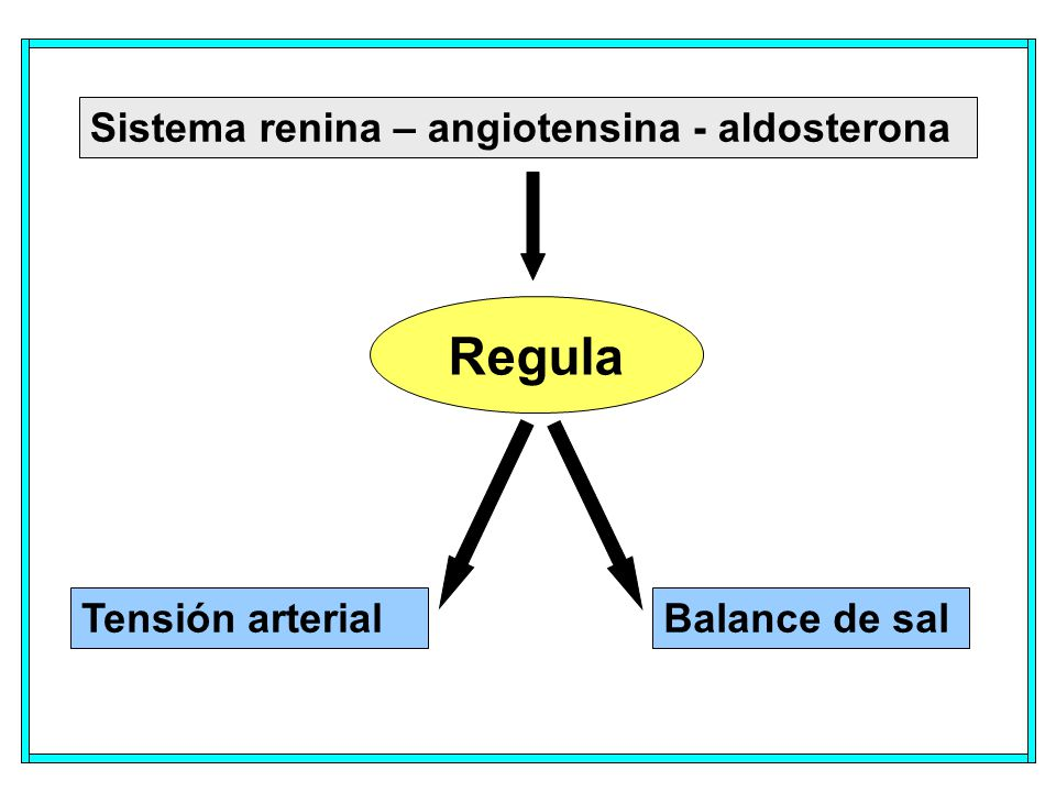 Regula Sistema renina – angiotensina - aldosterona Tensión arterial