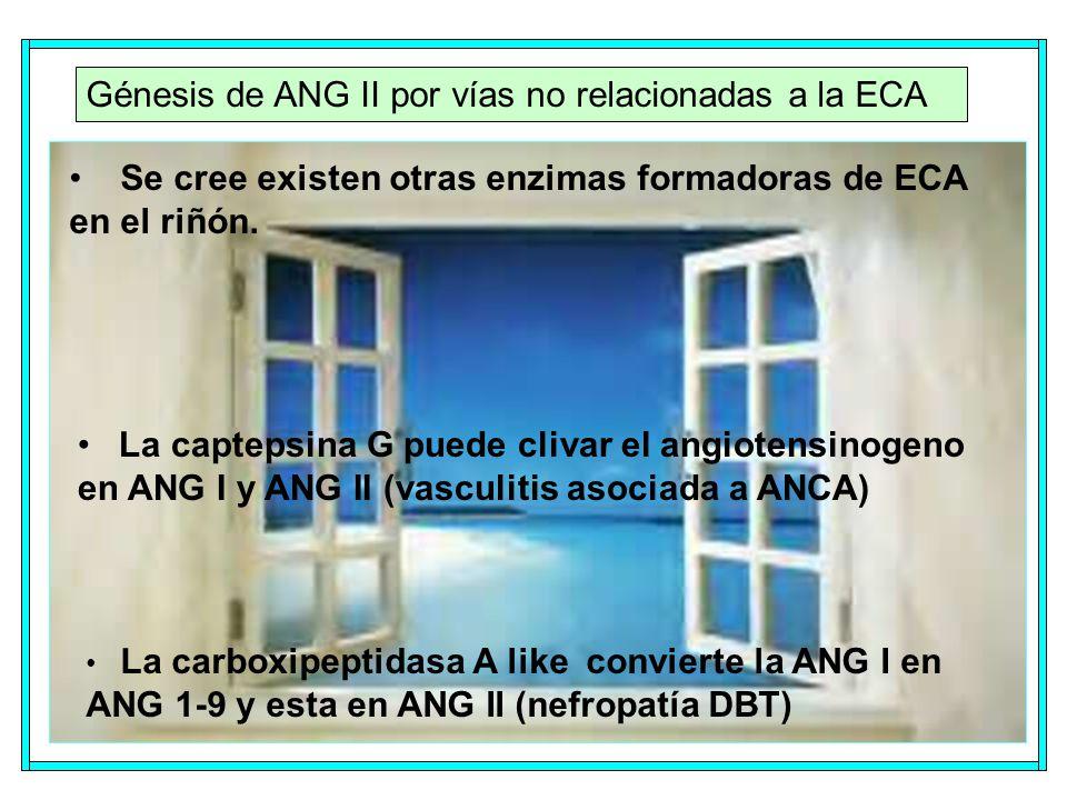 Génesis de ANG II por vías no relacionadas a la ECA