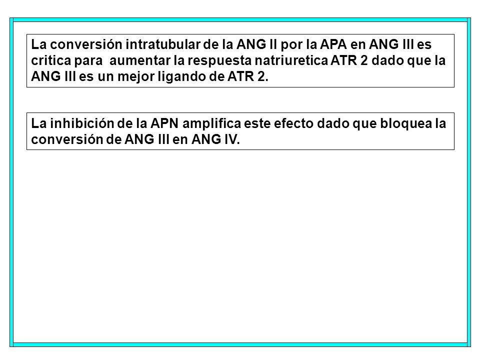 La conversión intratubular de la ANG II por la APA en ANG III es critica para aumentar la respuesta natriuretica ATR 2 dado que la ANG III es un mejor ligando de ATR 2.