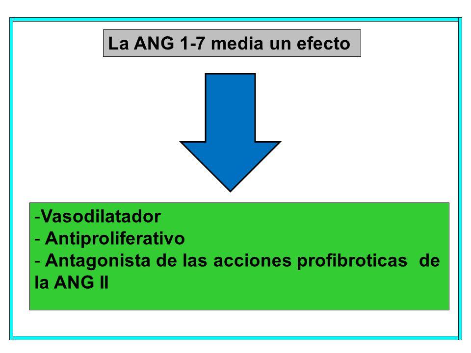 La ANG 1-7 media un efecto Vasodilatador. Antiproliferativo.