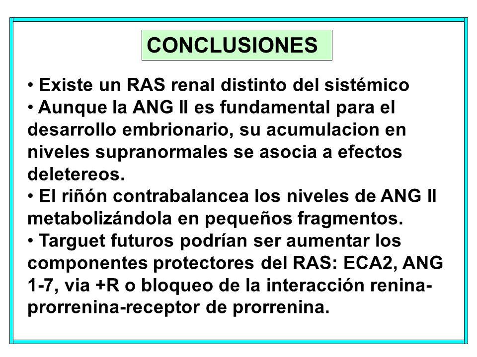 CONCLUSIONES Existe un RAS renal distinto del sistémico