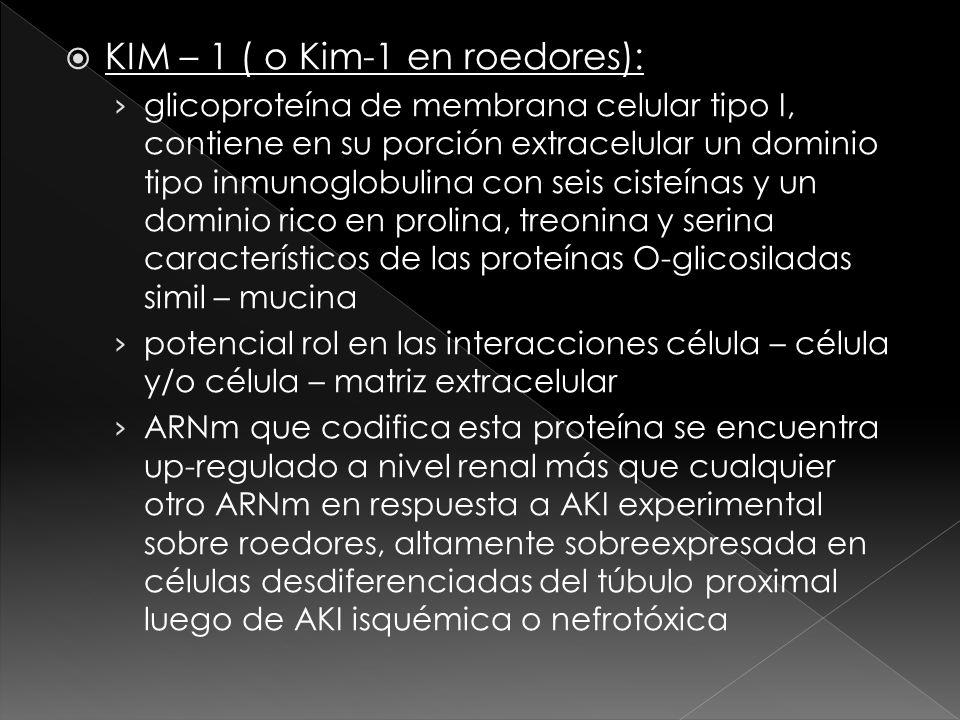 KIM – 1 ( o Kim-1 en roedores):