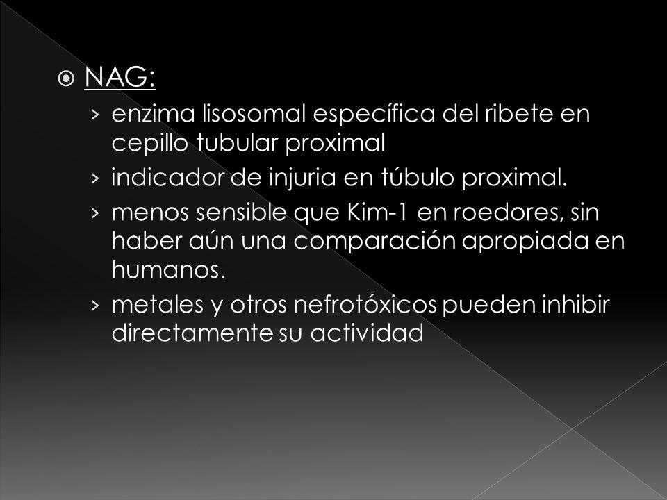 NAG: enzima lisosomal específica del ribete en cepillo tubular proximal. indicador de injuria en túbulo proximal.