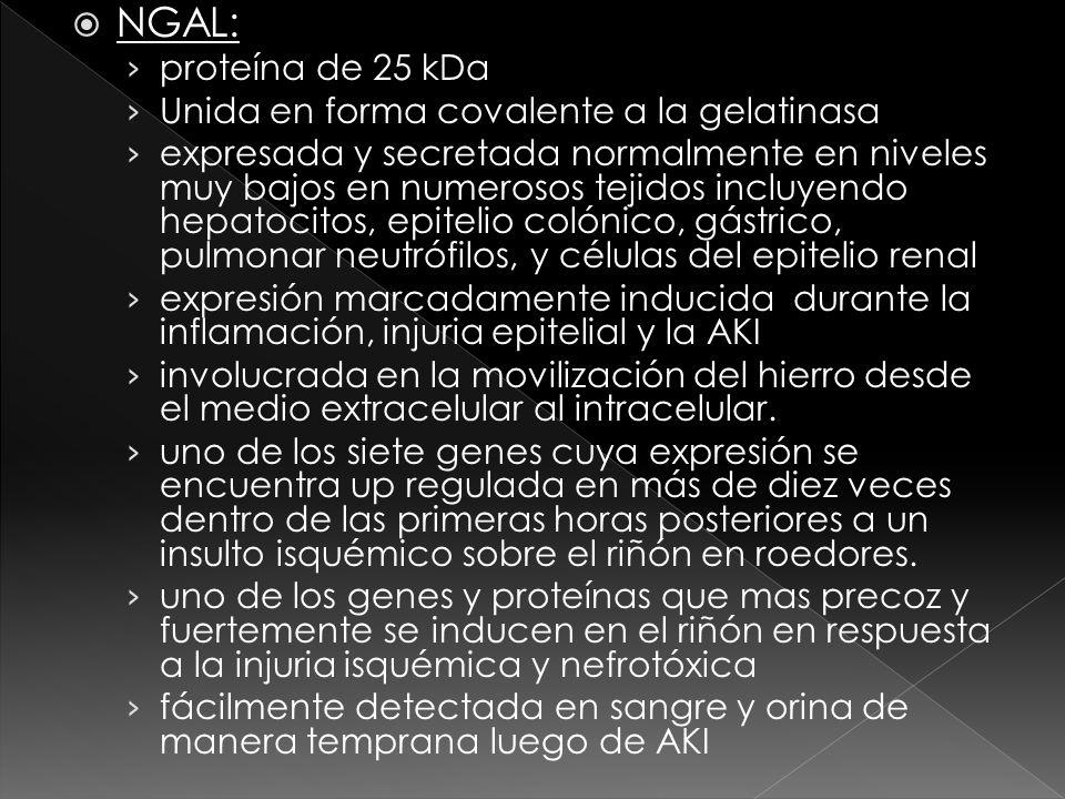 NGAL: proteína de 25 kDa Unida en forma covalente a la gelatinasa