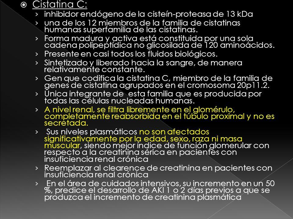 Cistatina C: inhibidor endógeno de la cisteín-proteasa de 13 kDa