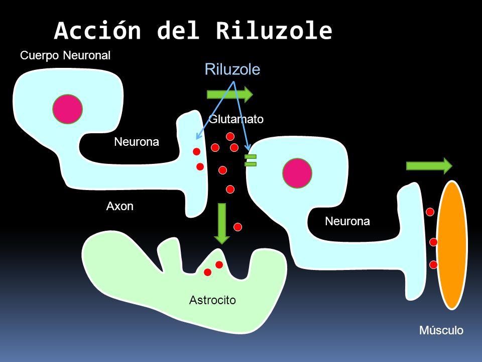 Acción del Riluzole Riluzole Cuerpo Neuronal Glutamato Neurona Axon