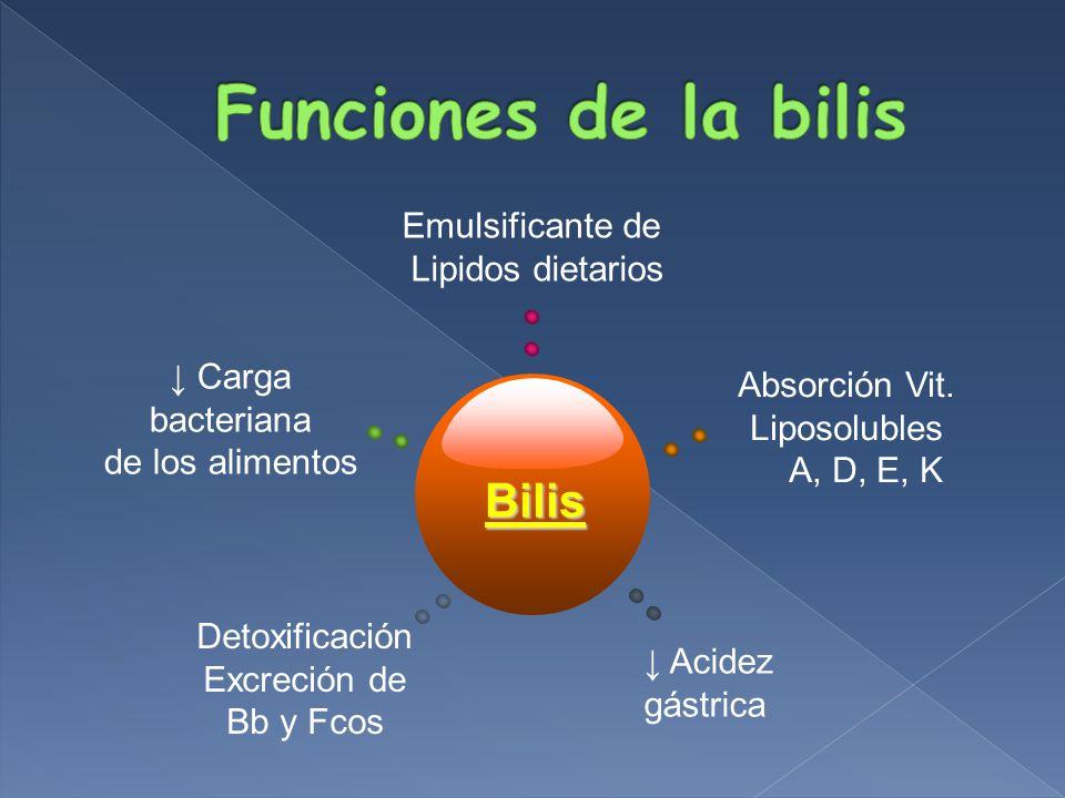 Funciones de la bilis Bilis Emulsificante de Lipidos dietarios