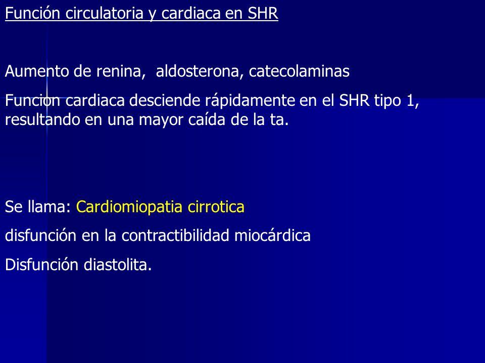 Función circulatoria y cardiaca en SHR