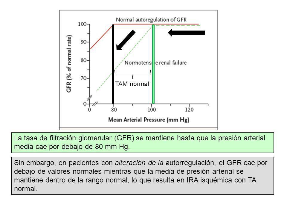 TAM normal La tasa de filtración glomerular (GFR) se mantiene hasta que la presión arterial media cae por debajo de 80 mm Hg.