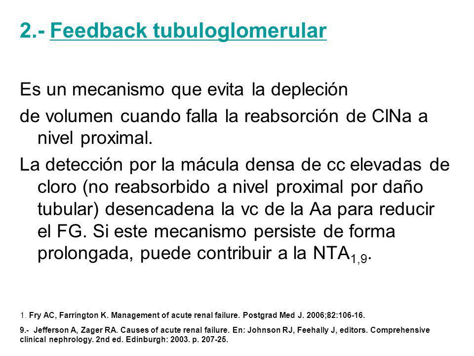 2.- Feedback tubuloglomerular