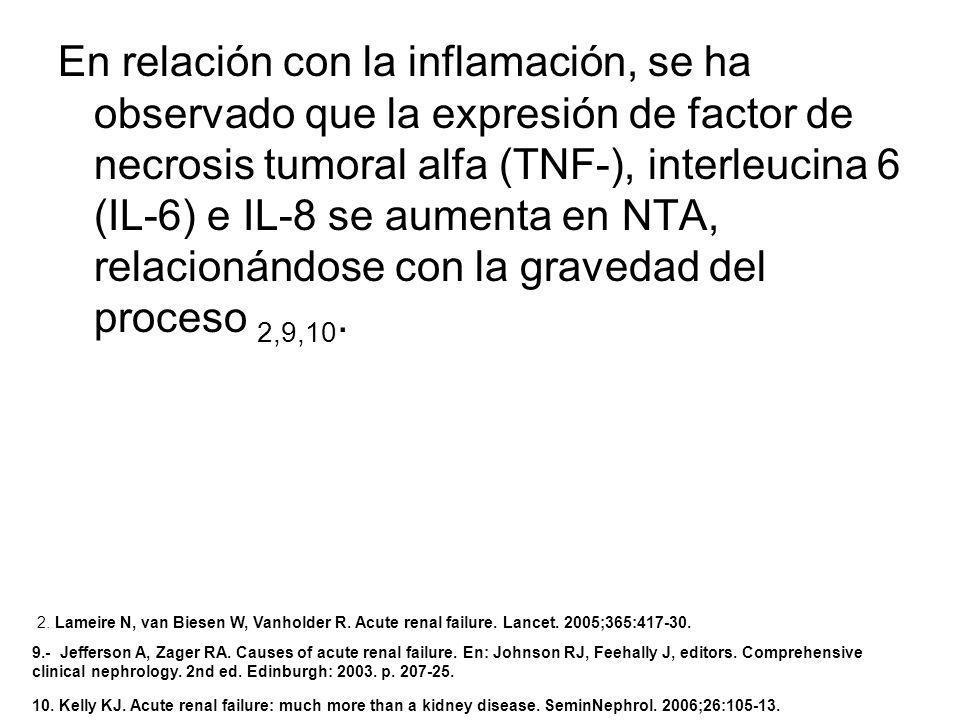 En relación con la inflamación, se ha observado que la expresión de factor de necrosis tumoral alfa (TNF-), interleucina 6 (IL-6) e IL-8 se aumenta en NTA, relacionándose con la gravedad del proceso 2,9,10.