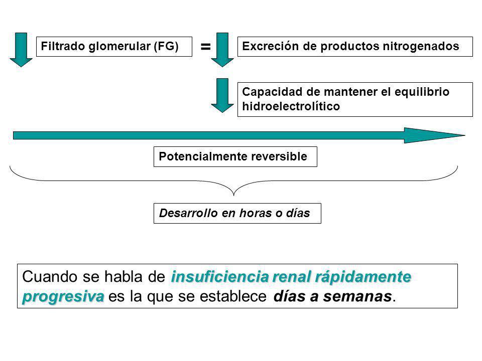 = Filtrado glomerular (FG) Excreción de productos nitrogenados. Capacidad de mantener el equilibrio hidroelectrolítico.