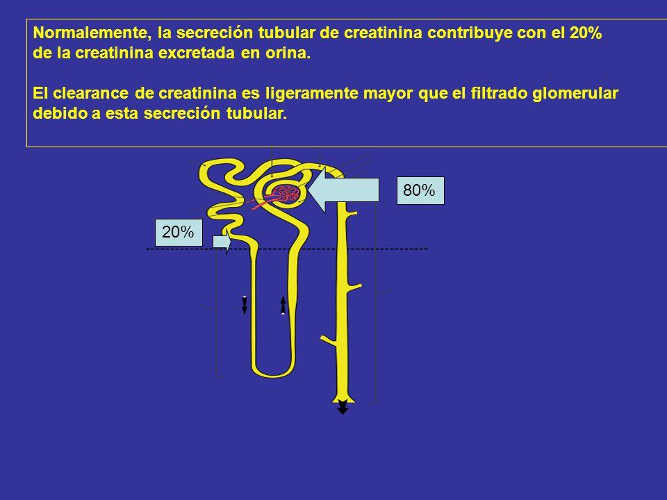 Normalemente, la secreción tubular de creatinina contribuye con el 20%