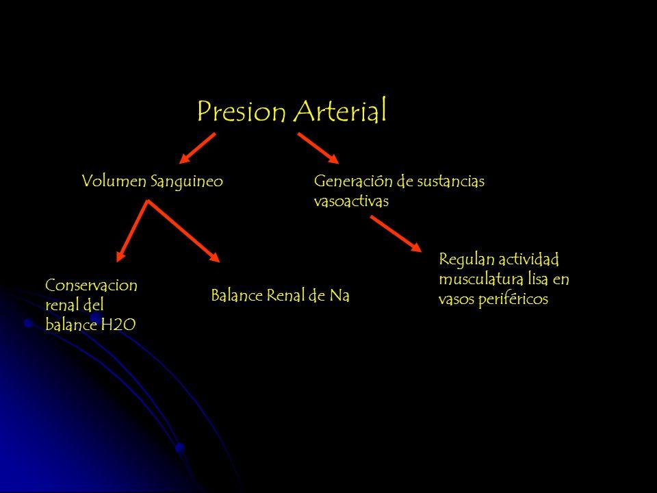 Presion Arterial Volumen Sanguineo