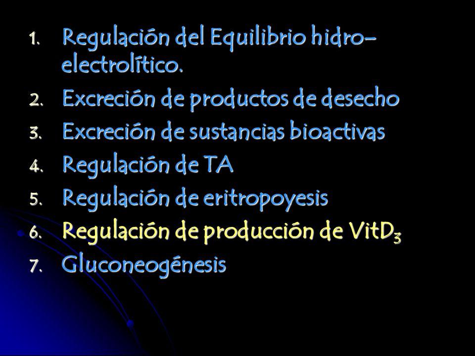 Regulación del Equilibrio hidro–electrolítico.