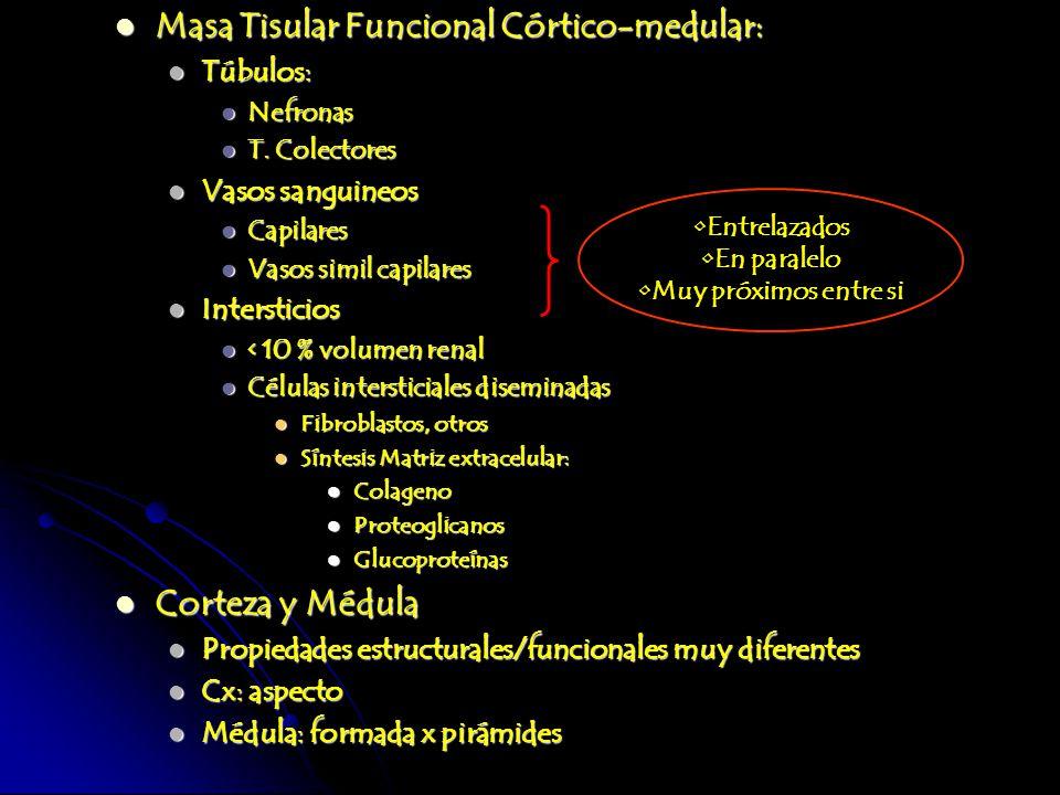 Masa Tisular Funcional Córtico-medular: