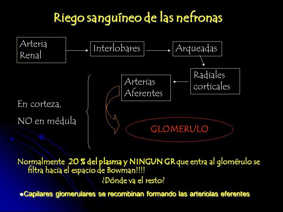 Riego sanguíneo de las nefronas