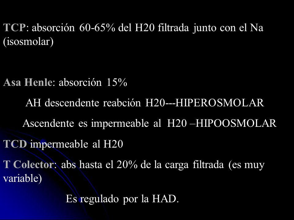 TCP: absorción 60-65% del H20 filtrada junto con el Na (isosmolar)