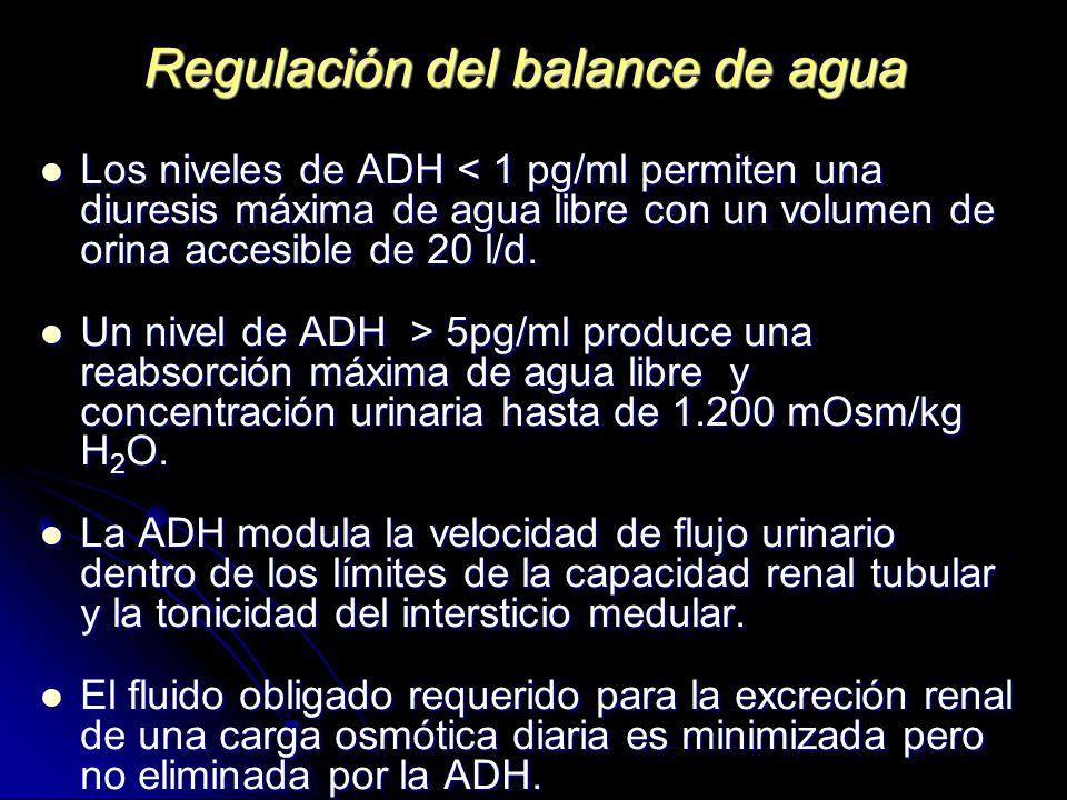 Regulación del balance de agua