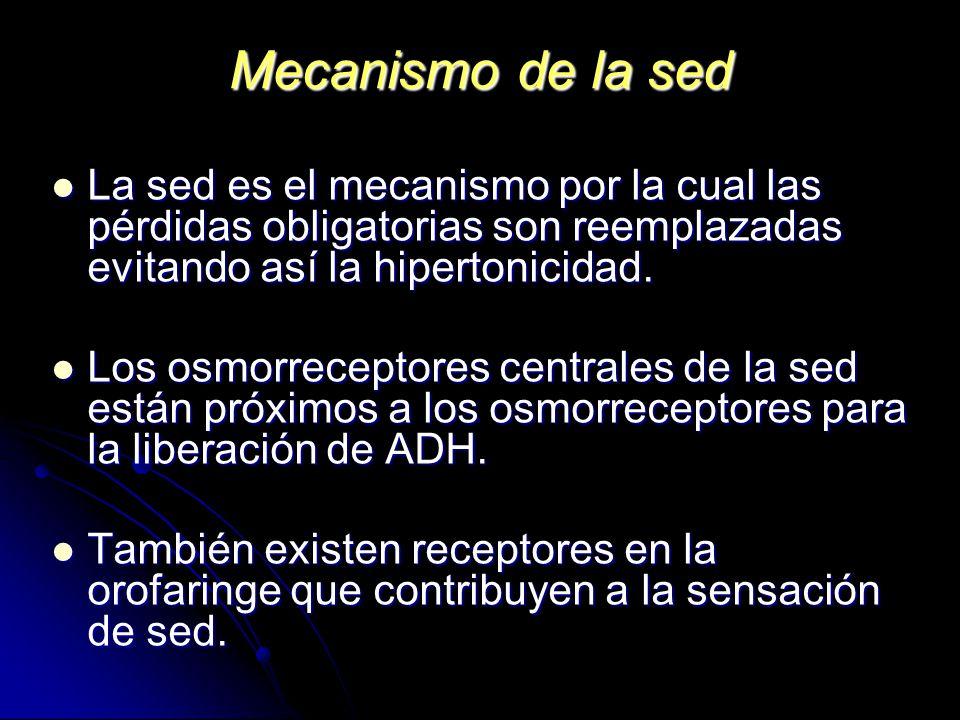 Mecanismo de la sed La sed es el mecanismo por la cual las pérdidas obligatorias son reemplazadas evitando así la hipertonicidad.