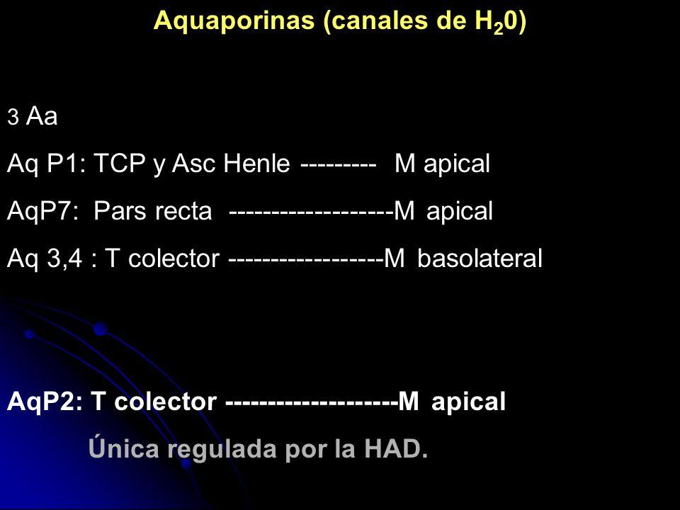 Aquaporinas (canales de H20)