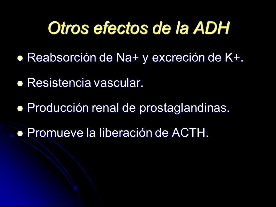 Otros efectos de la ADH Reabsorción de Na+ y excreción de K+.