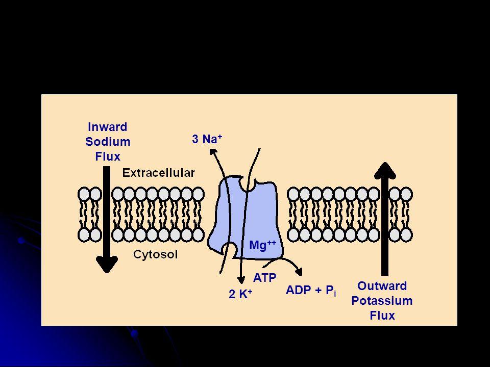 Inward Sodium Flux Outward Potassium 3 Na+ 2 K+ ATP Mg++ ADP + Pi