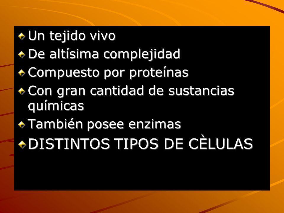 DISTINTOS TIPOS DE CÈLULAS