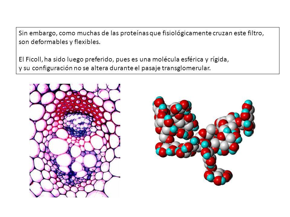 Sin embargo, como muchas de las proteínas que fisiológicamente cruzan este filtro,