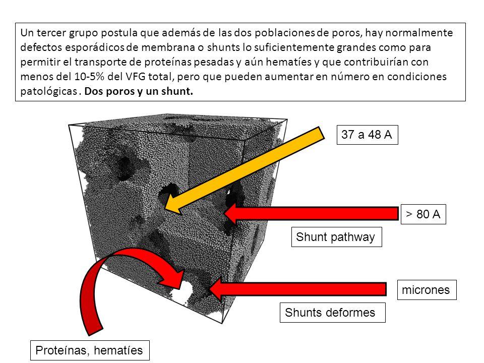 Un tercer grupo postula que además de las dos poblaciones de poros, hay normalmente defectos esporádicos de membrana o shunts lo suficientemente grandes como para