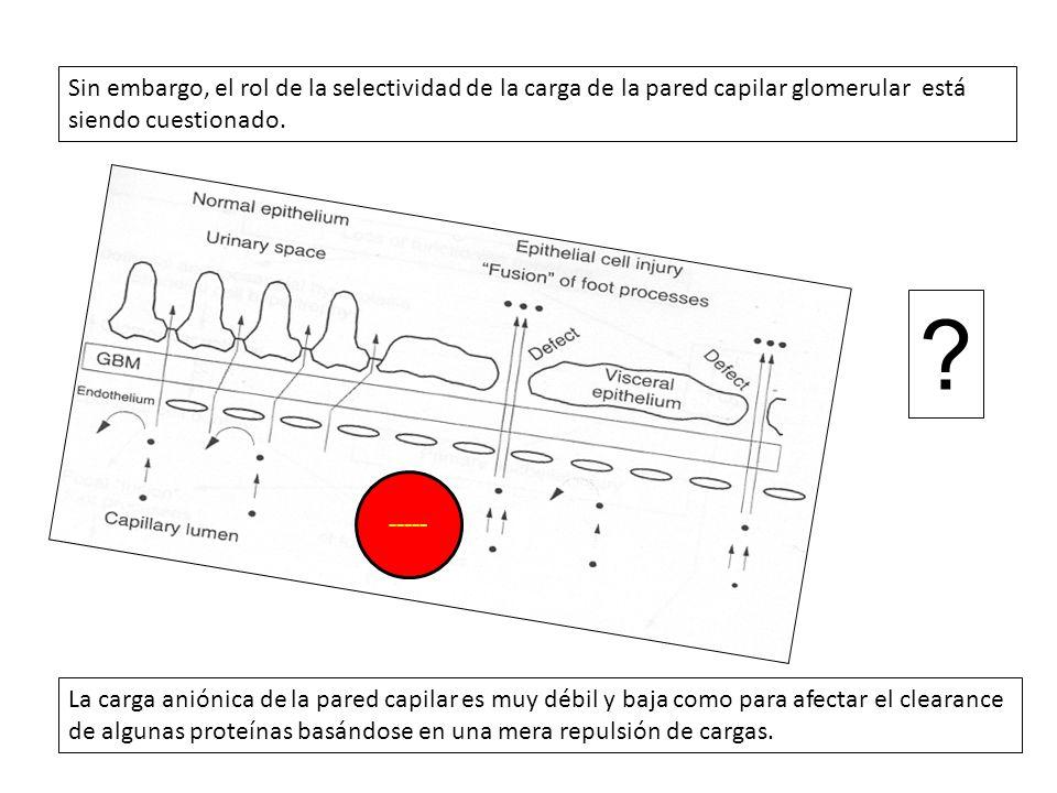 Sin embargo, el rol de la selectividad de la carga de la pared capilar glomerular está siendo cuestionado.